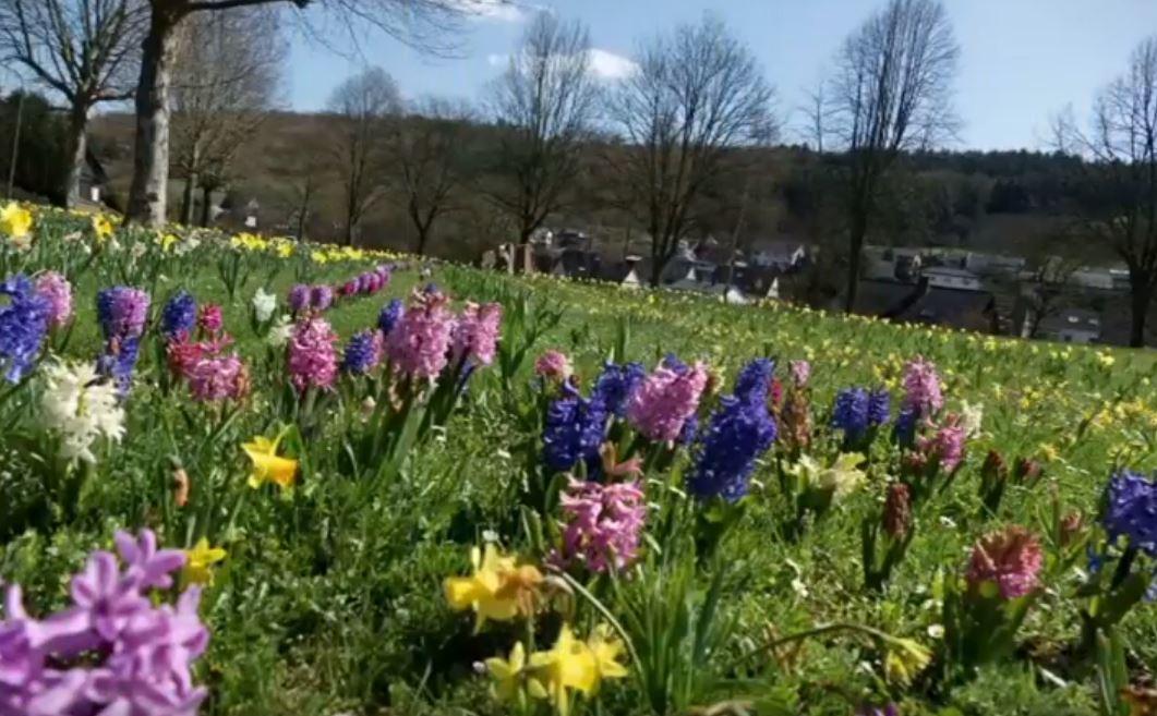 Blumenpracht am Geißenpark